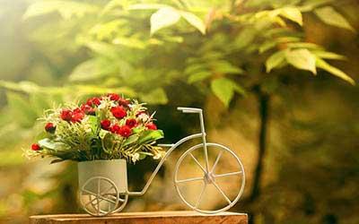 Цветы оптом в брянске